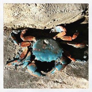 PR127 - Crab