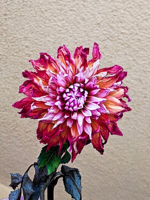 transfiguration # 149 the beauty of a wilting flower mix (tina burner)