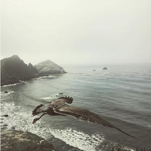 Warm Focus: This Bird Has Flown