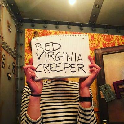 RED VIRGINIA CREEPER