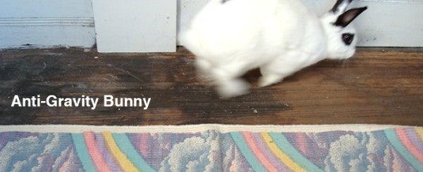 Anti-Gravity Bunny's Top 10 Non-Drone Records Of 2014